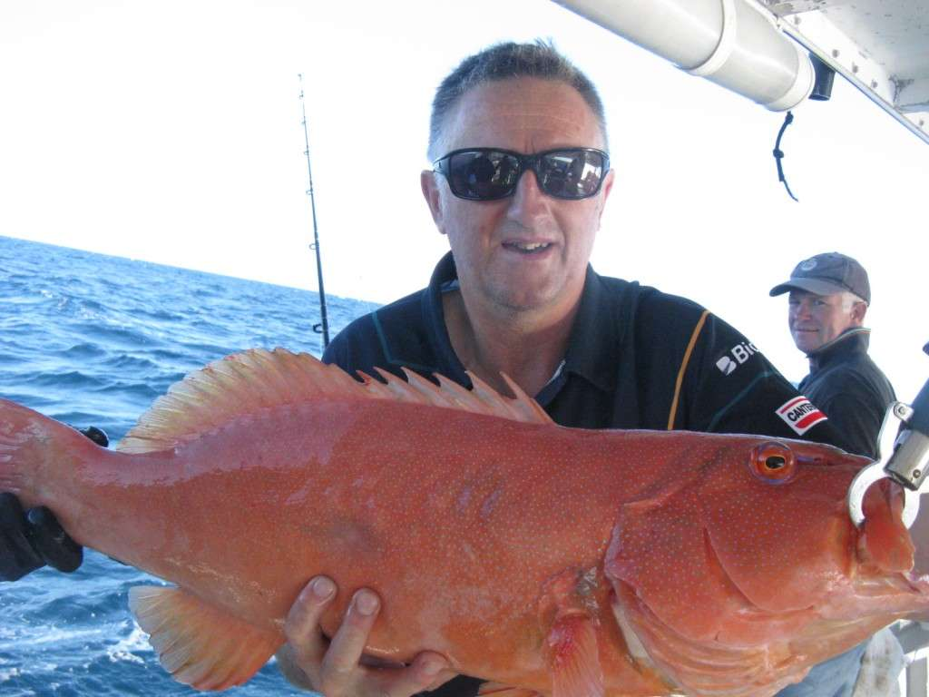 coral trout 6.5kg from murphys