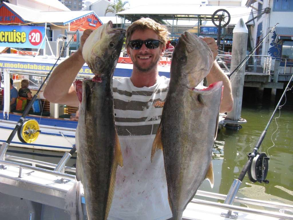 cobia and amberjack from a half day