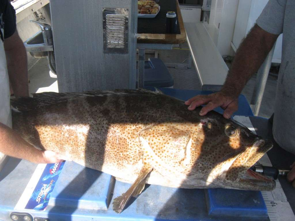 cod over 30kg