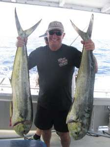 mahi mahi to 10kg from the banks