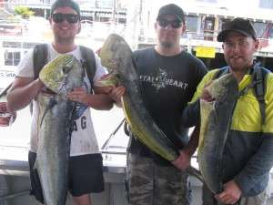mahi mahi to 12kg from the banks