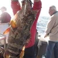 14.5kg gold spot estuary cod caught on the caloundra 12nm