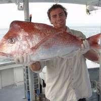 ocean fish caught on the Sunshine Coast